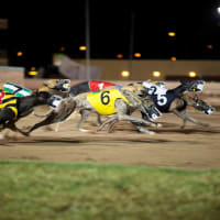 Greyhound Racing Night
