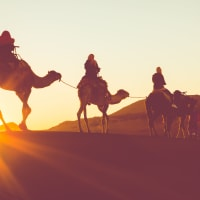 Morning Camel Trek