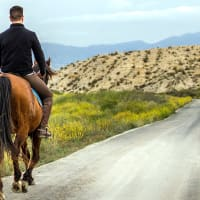 Horse Riding in the Catalan Mountains