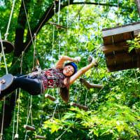 High Ropes & Zipline