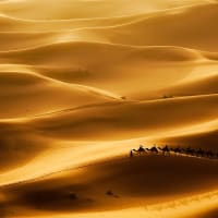 Gold of the Desert Kings™ - Planning, Productivity, Performance
