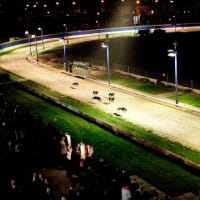 Greyhound Racing with 3 Course Meal