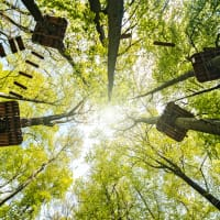 High Ropes Forest