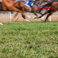 Horses running at ascot racecourse