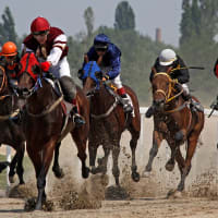 Hungarian Horse Race Tickets at Kincsem Park
