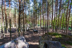 Adventure Park - Paintball Site - GdyniaAdventure Park - Paintball Site - Gdynia