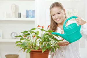 House Plant - Ways To Reduce Wedding Stress