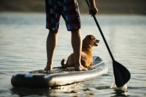 Paddleboarding with dog