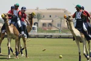 Camel Polo