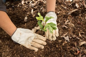Planting a Tree - Carbon Offset