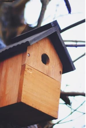Virtual Bird Box