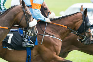 Horse Racing Tickets at Kempton Park Racecourse