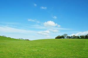 Green field parkland