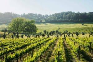 Jose Maria Da Fonseca - Wine yards