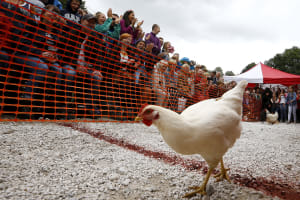 World Hen Racing Championships
