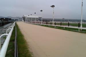 Newcastle Greyhound Stadium - Race track