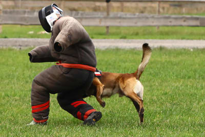 A man is chased by an angry dog durning a stag prank