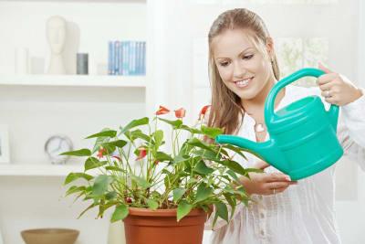 House Plant - Ways To Reduce Wedding Stress