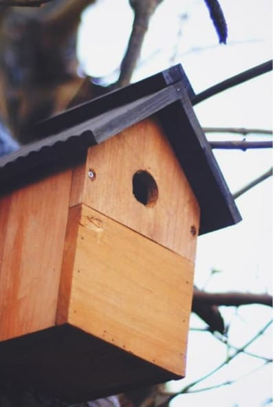 Virtual Bird Box