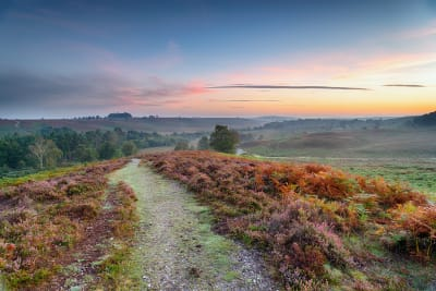 New Forest at dawn