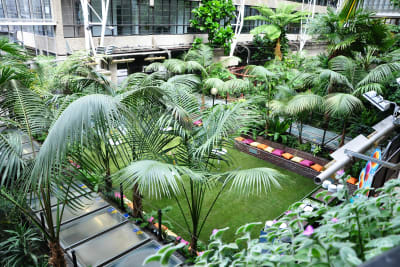 Barbican - Conservatory - Day Grass