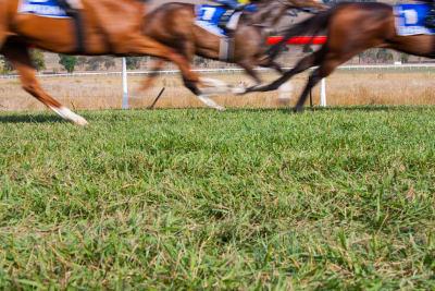 Horses running at ascot racecourse