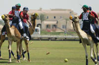 camel polo group of stags edit