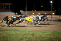 Greyhounds racing round a track