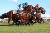 Horses racing on a grass track