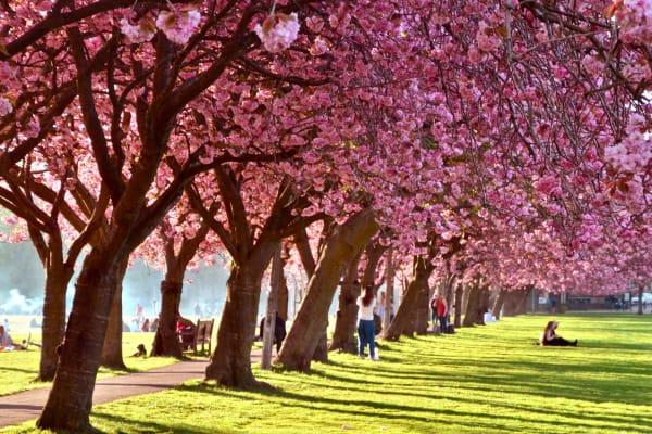 Edinburgh Spring