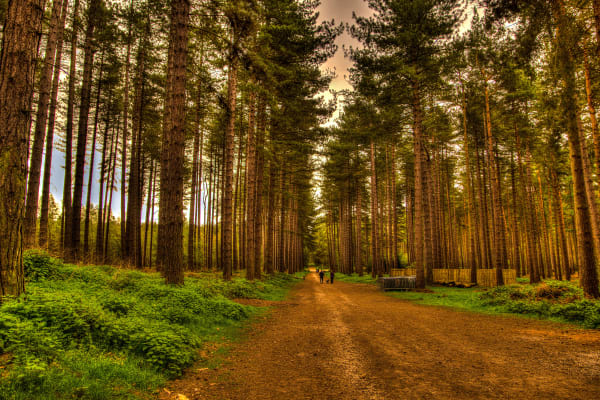 Nottingham Sherwood Forest