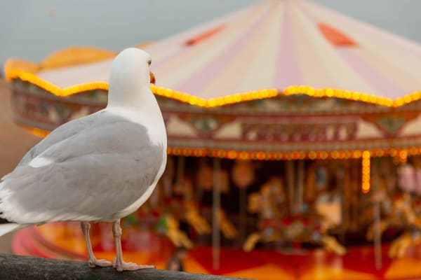 A seagull look at the Carousel with horses on Brighton beach. East Sussex England.